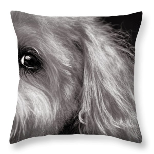 The Dog Next Door Throw Pillow by Bob Orsillo