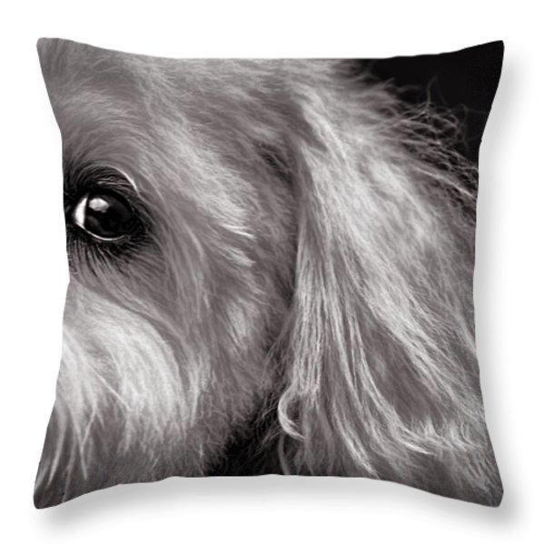 The Dog Next Door Throw Pillow by Bob Orsillo