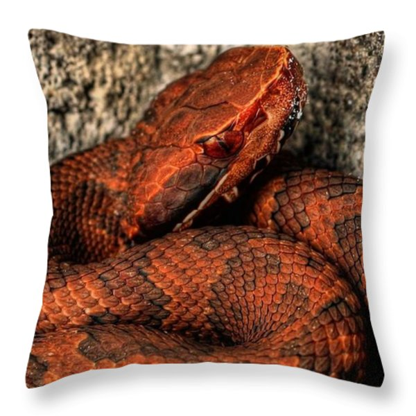 The Florida Cottonmouth Throw Pillow by JC Findley