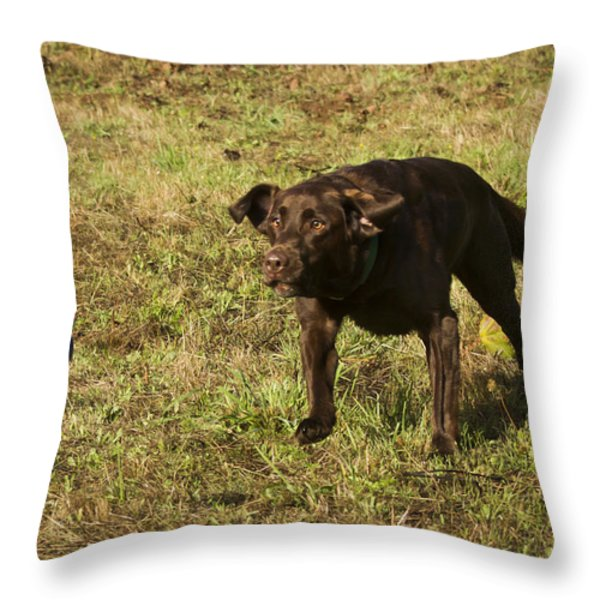 The Flying Lab Throw Pillow by Jean Noren