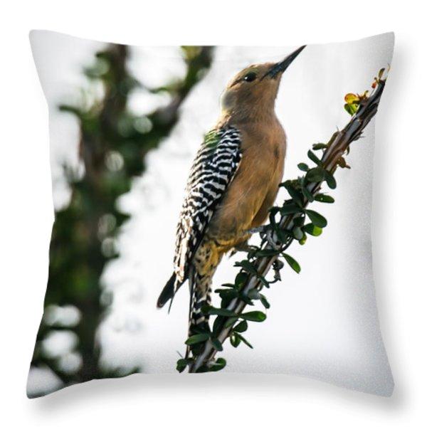 The Gila  Woodpecker Throw Pillow by Robert Bales
