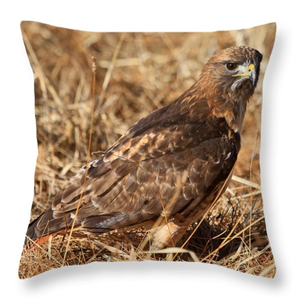 The Hunt 2 Throw Pillow by Donna Kennedy