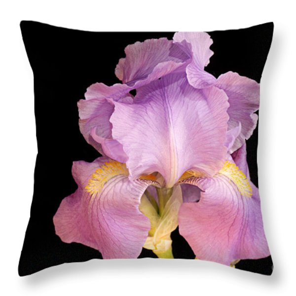 The Iris In All Her Glory Throw Pillow by Andee Design