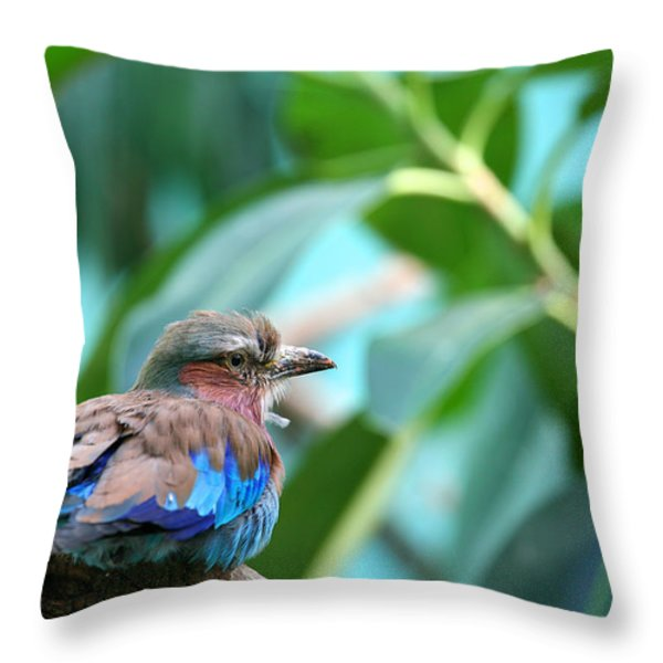 The Lilac Breasted Roller Throw Pillow by Karol  Livote