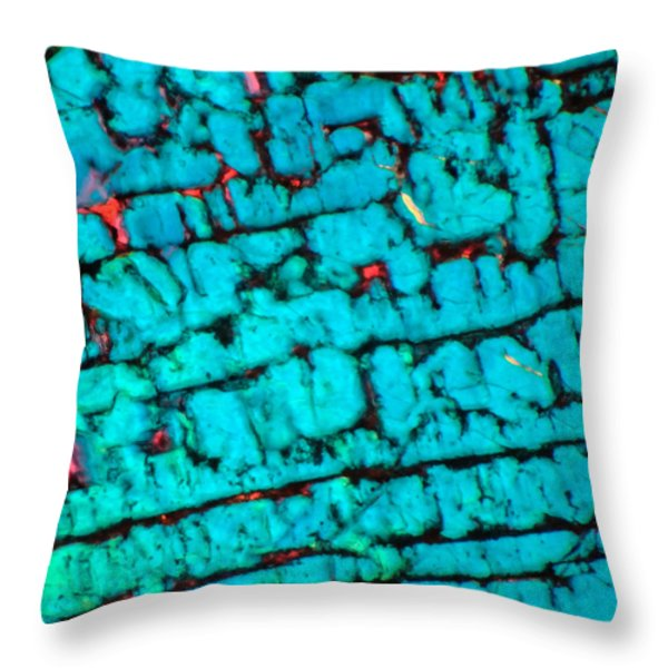 The Maze Throw Pillow by Tom Phillips
