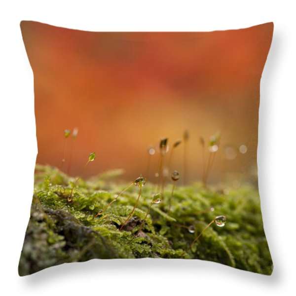 The Miniature World of Moss  Throw Pillow by Anne Gilbert