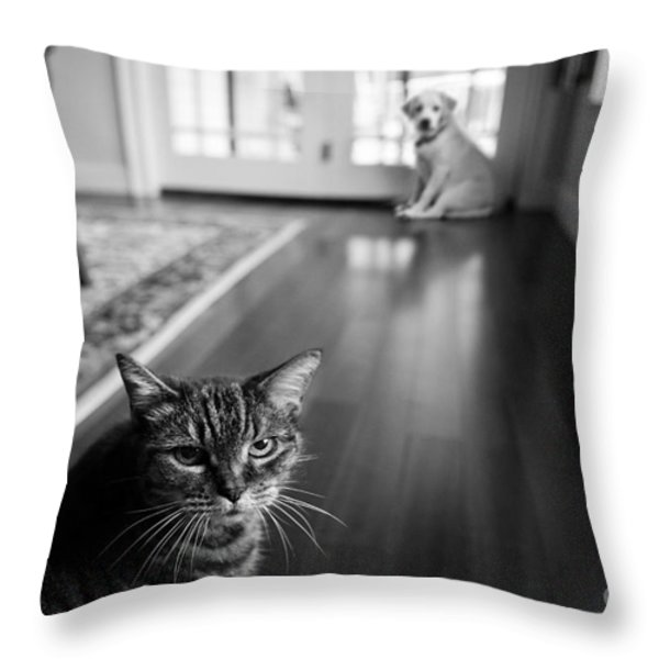 The old cat and the new puppy Throw Pillow by Diane Diederich