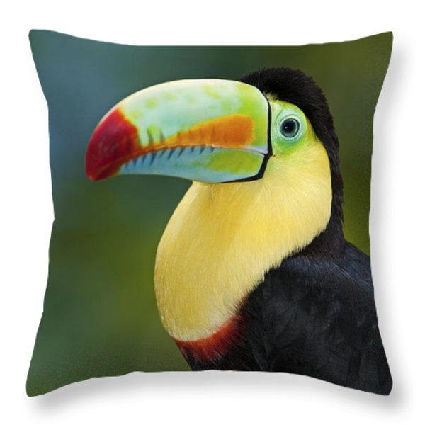 The Rainbow Bird.. Throw Pillow by Nina Stavlund
