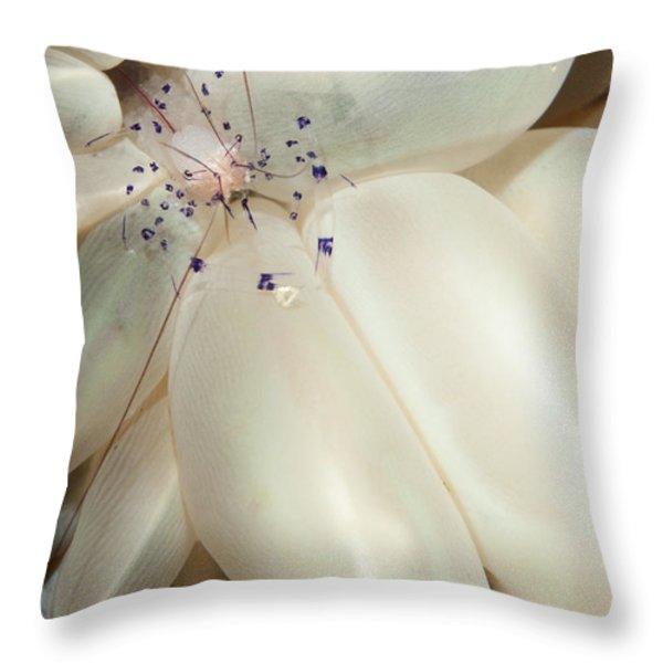 The Rare Colemans Coral Shrimp Throw Pillow by Steve Jones