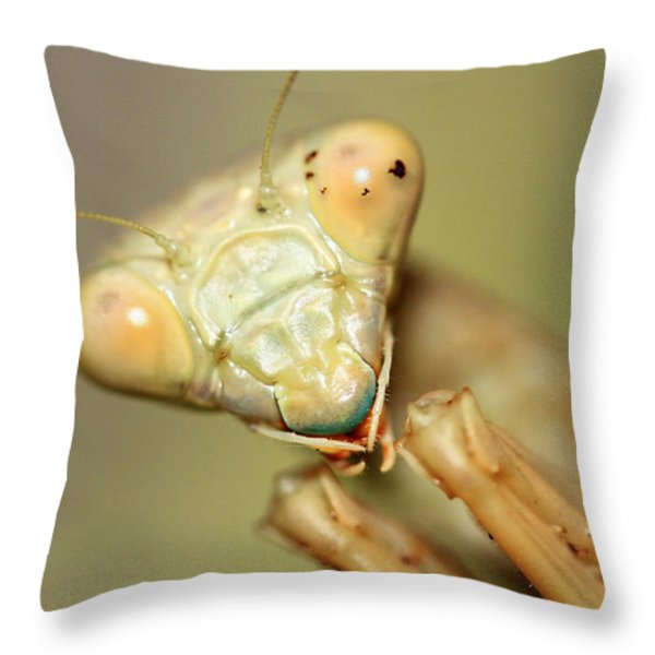 The Real Predator  Throw Pillow by Shoal Hollingsworth