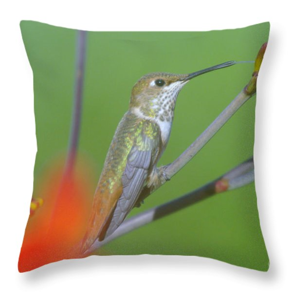 The tongue of a humming bird  Throw Pillow by Jeff  Swan