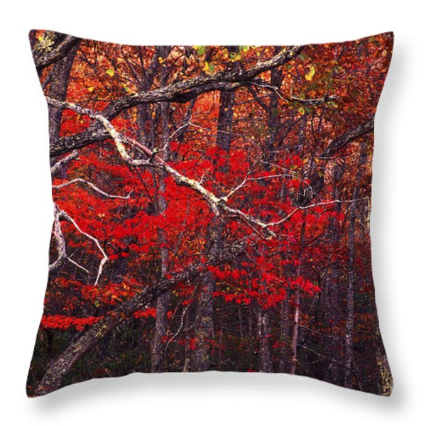 The Woods Aflame In Red Throw Pillow by Paul W Faust -  Impressions of Light