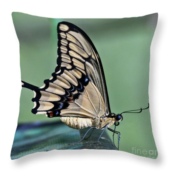 Thoas Swallowtail Butterfly Throw Pillow by Heiko Koehrer-Wagner