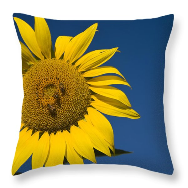 Three Bees and a Sunflower Throw Pillow by Adam Romanowicz