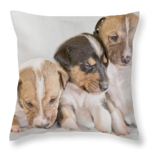 Three collie puppies Throw Pillow by Martin Capek
