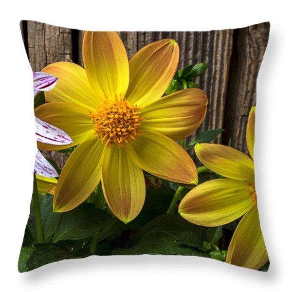 Three Dahlias Throw Pillow by Garry Gay