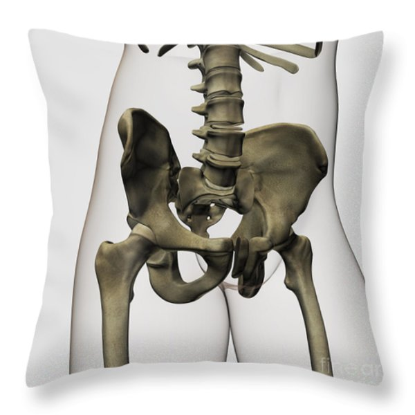 Three Dimensional View Of Human Pelvic Throw Pillow by Stocktrek Images