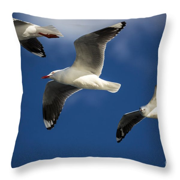 Three Silver Gulls In Flight Throw Pillow by Sheila Smart