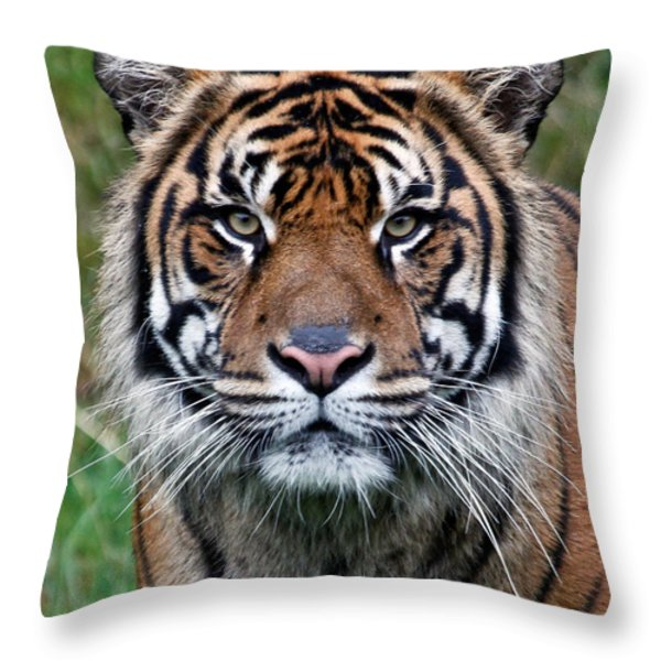 Tiger Throw Pillow by Athena Mckinzie