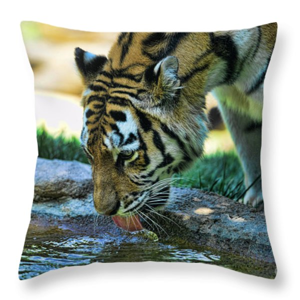 Tiger Drinking Water Throw Pillow by Paul Ward