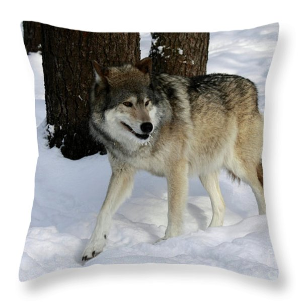 Timber Wolf In A Winter Snow Storm Throw Pillow by Inspired Nature Photography By Shelley Myke