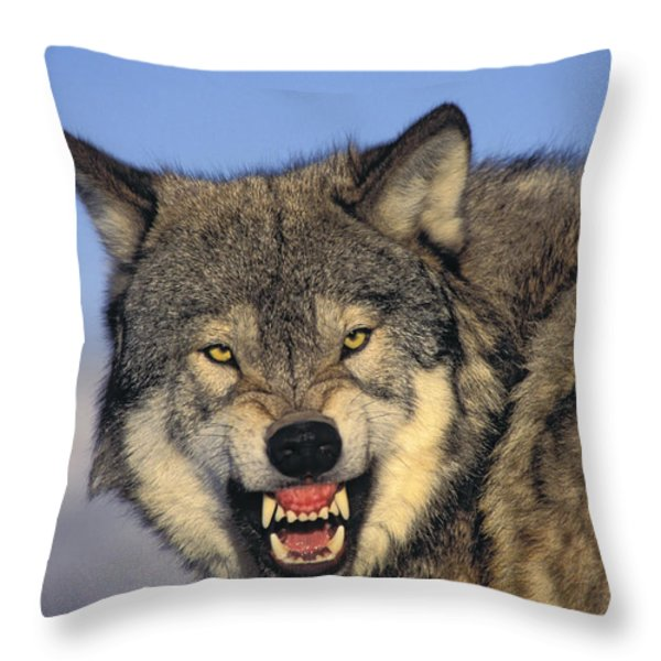 T.kitchin Wolf Snarling Throw Pillow by First Light