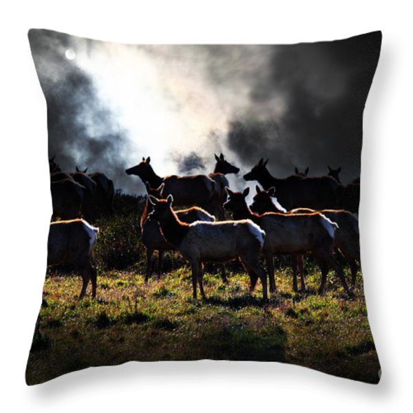 Tomales Bay Harem Under The Midnight Moon - 7D21241 Throw Pillow by Wingsdomain Art and Photography