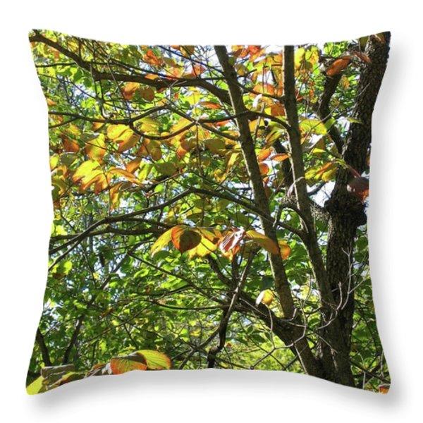 Touch Of Autumn Throw Pillow by Ann Horn