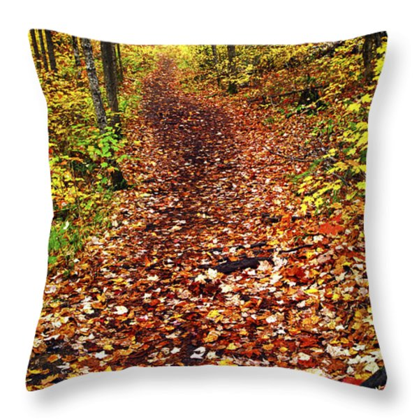 Trail In Fall Forest Throw Pillow by Elena Elisseeva