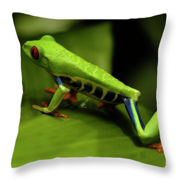 Tree Frog 12 Throw Pillow by Bob Christopher