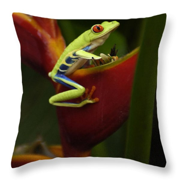 Tree Frog 3 Throw Pillow by Bob Christopher