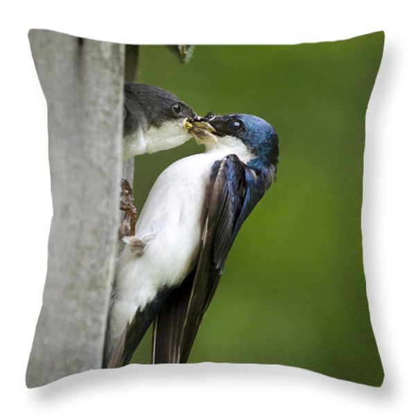 Tree Swallow Feeding Chick Throw Pillow by Christina Rollo
