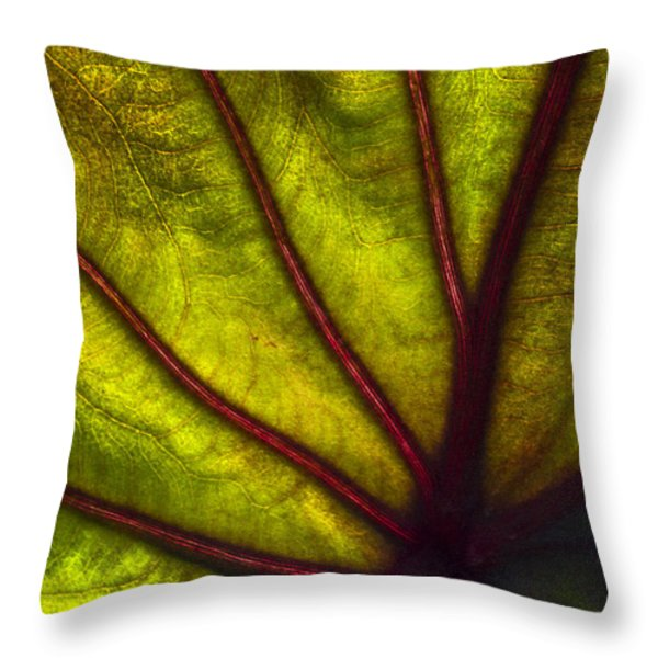 Tributaries Throw Pillow by Debra and Dave Vanderlaan