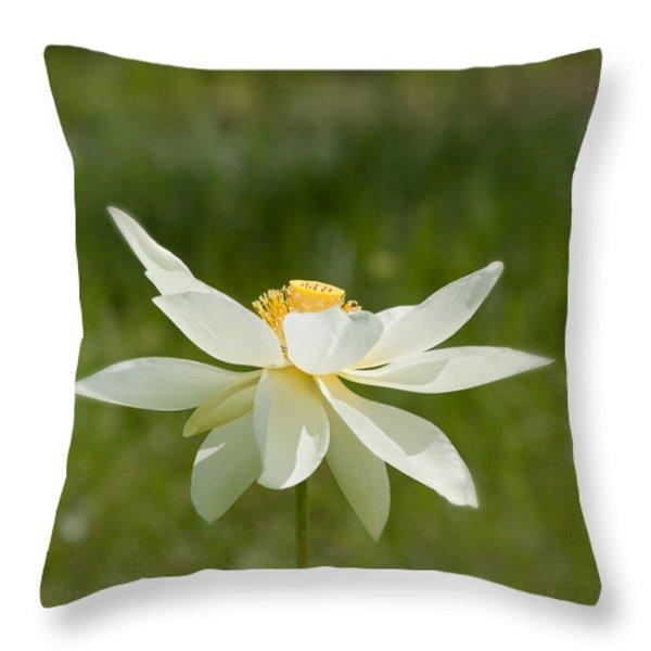 Tropical Lotus Flower Throw Pillow by Kim Hojnacki