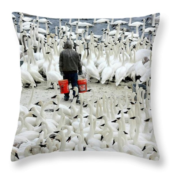 Trumpeter Swan Feeding Time Throw Pillow by Amanda Stadther