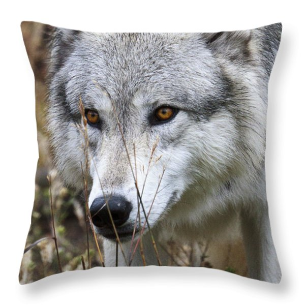 Trying To Hide D9884 Throw Pillow by Wes and Dotty Weber