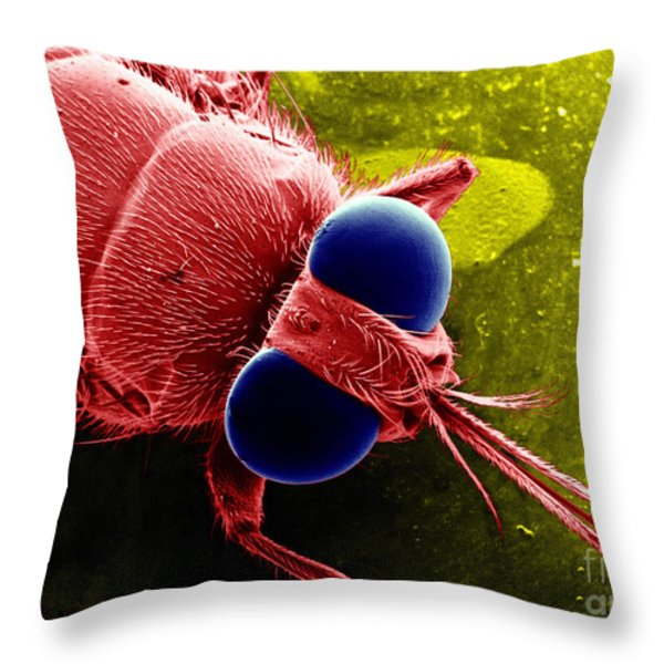 Tse Tse Fly Throw Pillow by BSIP