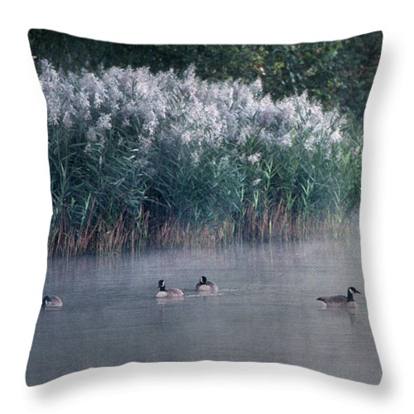 TUCKED AWAY Throw Pillow by Skip Willits