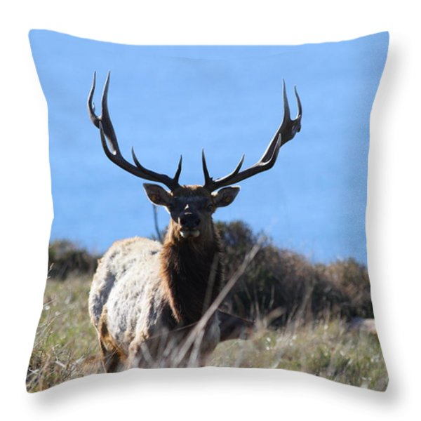Tules Elks of Tomales Bay California - 7D21201 Throw Pillow by Wingsdomain Art and Photography