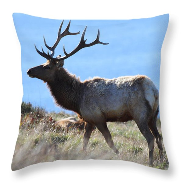 Tules Elks of Tomales Bay California - 7D21218 Throw Pillow by Wingsdomain Art and Photography
