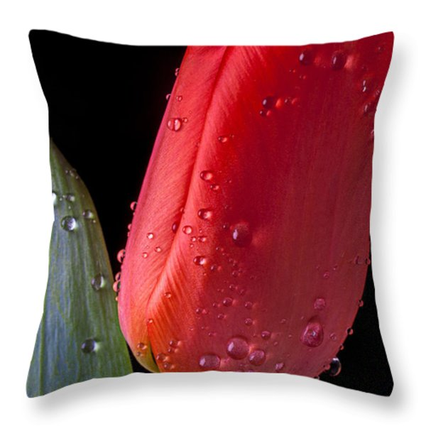 Tulip Close Up Throw Pillow by Garry Gay
