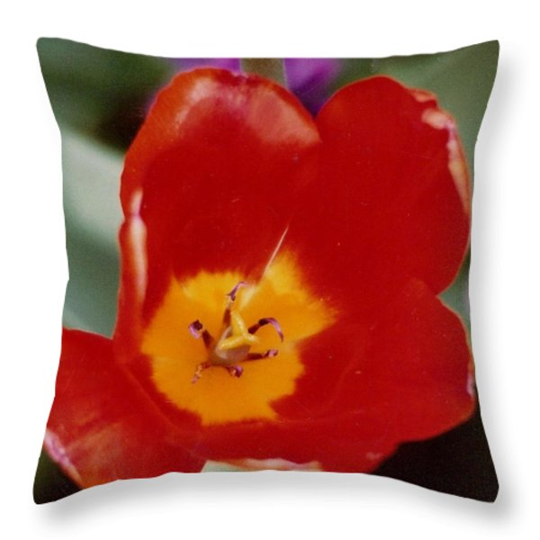 Tulip In Holland Throw Pillow by M and L Creations