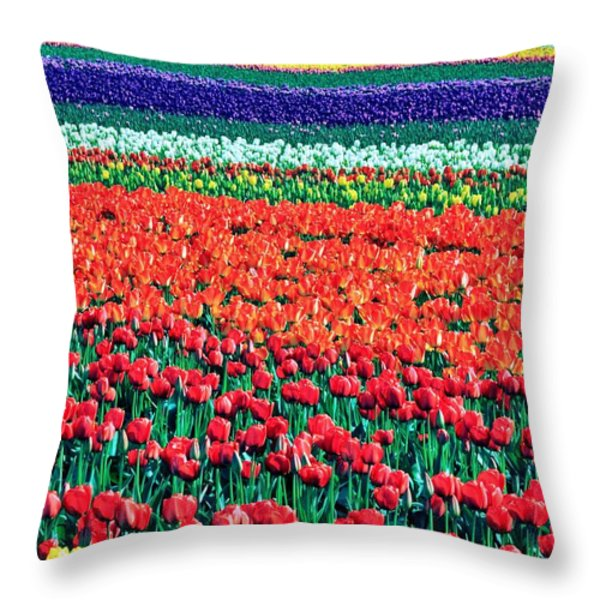 Tulipomania Throw Pillow by Benjamin Yeager