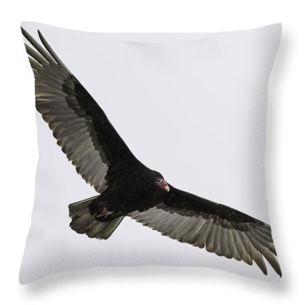 Turkey Vulture In Flight Throw Pillow by Thomas Young