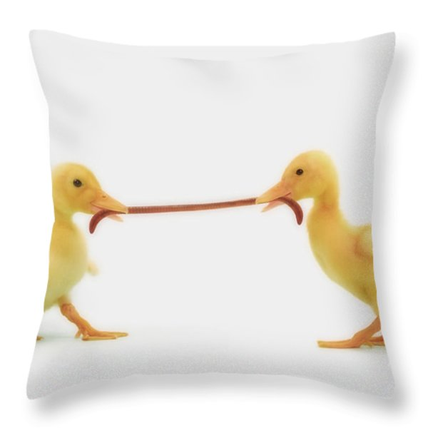 Two Baby Ducklings Fighting Throw Pillow by Thomas Kitchin & Victoria Hurst
