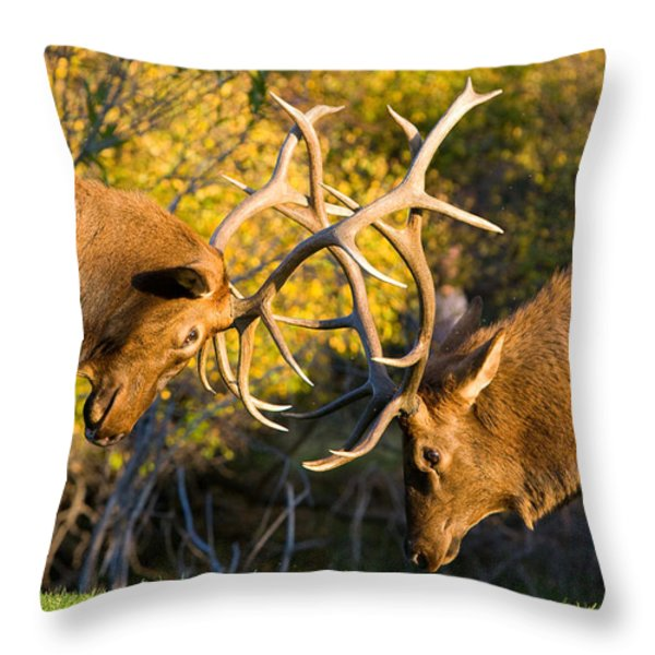 Two Elk Bulls Sparring Throw Pillow by James BO  Insogna