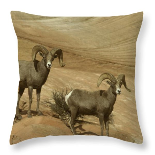 TWO MALE RAMS AT ZION Throw Pillow by Jeff  Swan