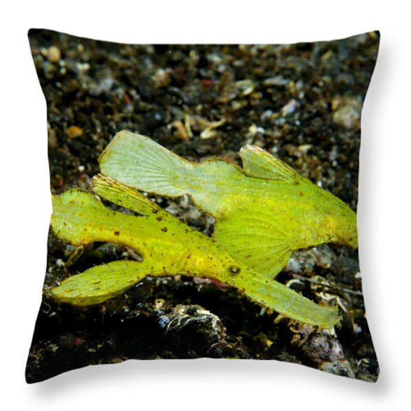 Two Robust Ghost Pipefish In Volcanic Throw Pillow by Steve Jones