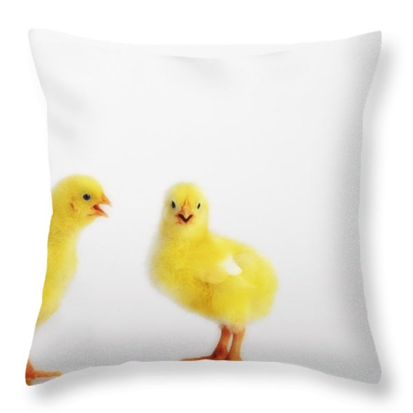 Two Yellow Baby Chicks Chirpingbritish Throw Pillow by Thomas Kitchin & Victoria Hurst