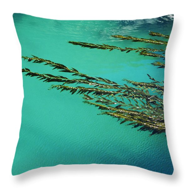 Usa, California, Seaweed Floating Throw Pillow by Larry Dale Gordon